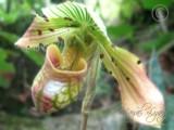 35 Wild Plant