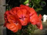 08 Flower In Front Garden
