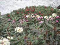 09 Flowers Of Keushong