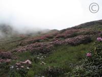 10 Flower Covered Keushong