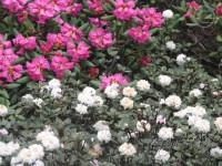 11 Beautiful Flowers Of Keushong
